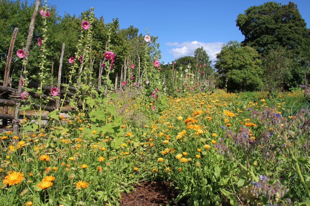 Wandelen in de tuin van Carl Linnaeus