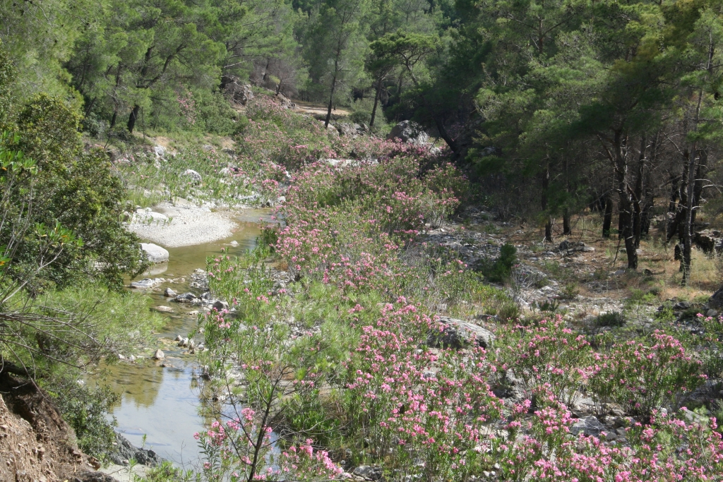 Van Lardos naar Asklipio: bossen, beken en kikkers