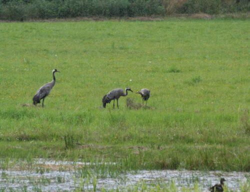 Kraanvogels en zebra's langs het pelgrimspad