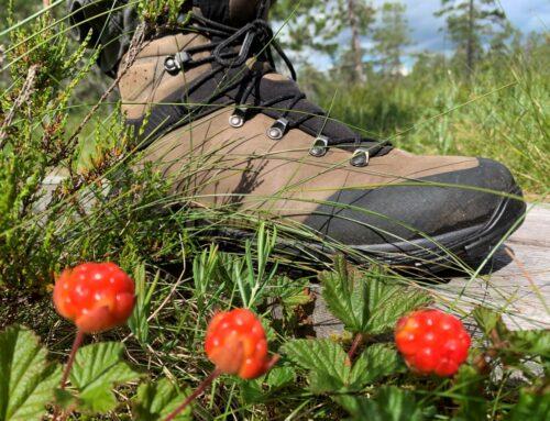 Hovfjället: wandelen in de bergen van Värmland